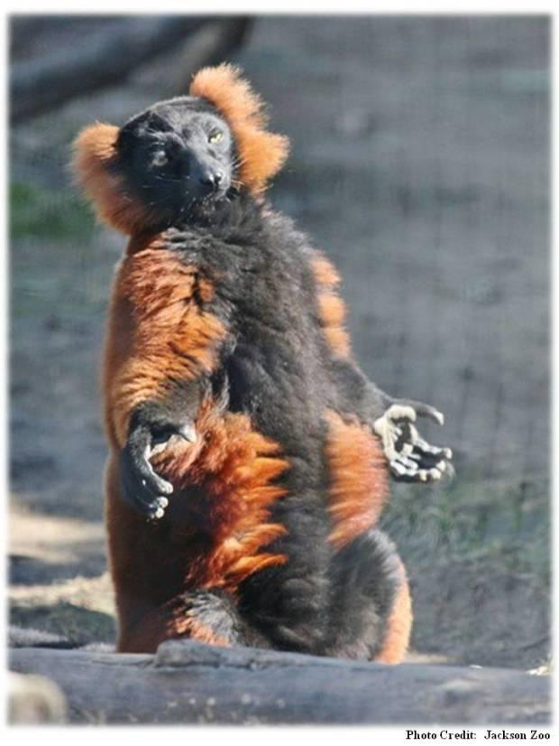 zoo jackson